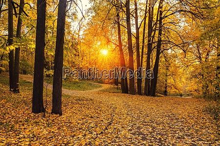 bright trees in sunny autumn park