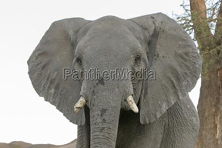 africa botswana senyati safari camp front