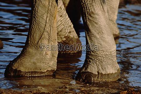 botswana chobe national park linyanti wildlife