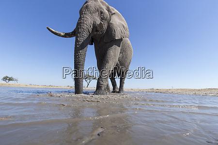 africa botswana chobe national park remote
