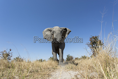 africa botswana chobe national park low