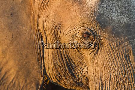 africa botswana chobe national park close
