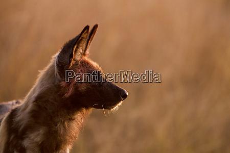 africa botswana moremi game reserve profile