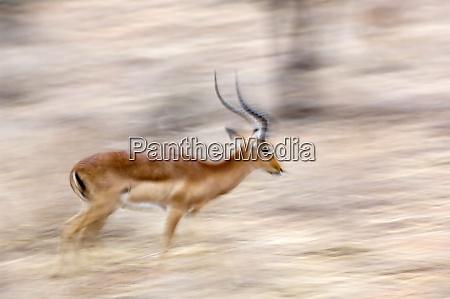 africa kenya samburu national reserve motion