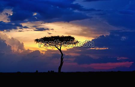 sun setting on the masai mara
