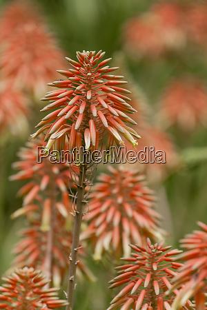 africa morocco marrakesh flowering plants in