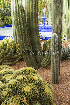 africa morocco marrakech the cactus and