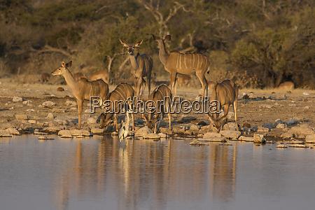 kudo small grouping evening light waters