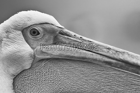 walvis bay namibia extreme close up