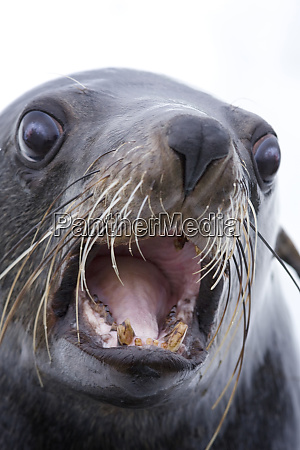 walvis bay namibia extreme close up