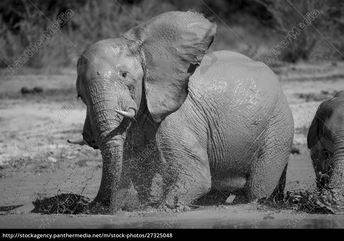 africa, , botswana, , africa, , botswana, , nxai, pan - 27325048