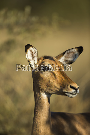 africa, , botswana, , moremi, game, reserve, , close-up - 27325182