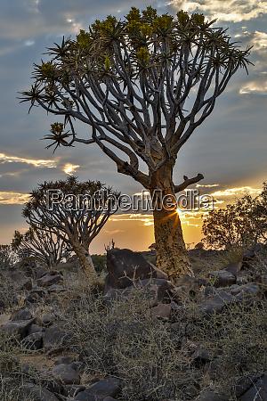 africa, , namibia, , keetmanshoop, , sunset, in, the - 27325927