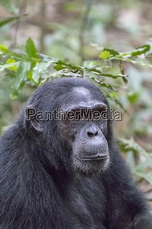 africa uganda kibale forest national park