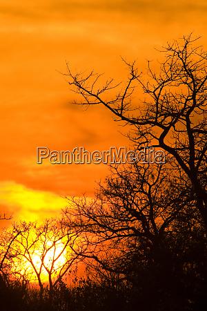 sunrise at sabi sand reserve mpumalanga