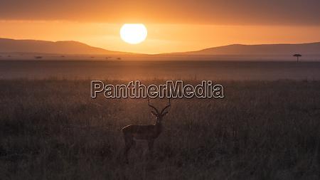 africa tanzania ngorongoro conservation area antelope