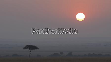 africa tanzania ngorongoro conservation area savannah