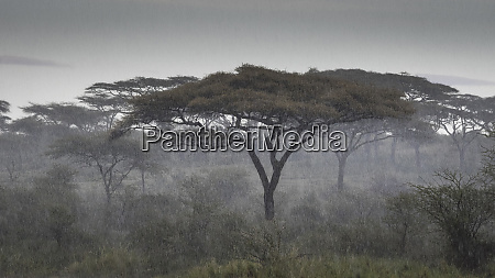africa tanzania ngorongoro conservation area rain