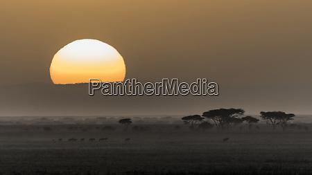 africa tanzania ngorongoro conservation area animals