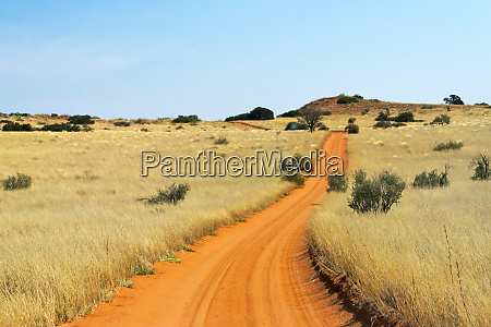 red sand road in kgalagadi transfrontier