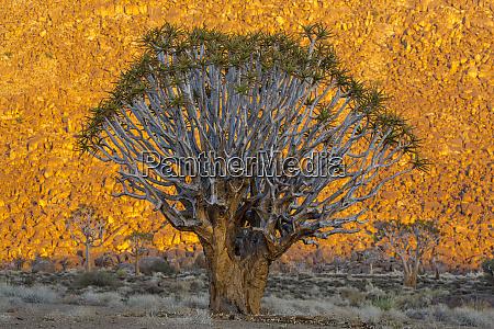 africa south africa richtersveld national park