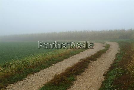 rural lane through foggy farm field