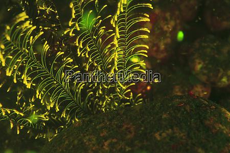 natural occurring fluorescence in underwater crinoids