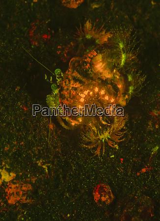 natural occurring fluorescence in underwater hermit
