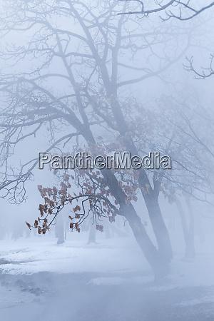 trees along frozen lake kussharo winter