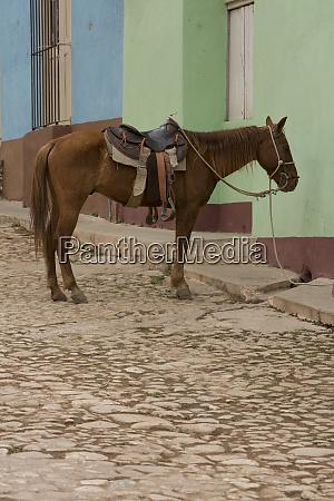 cuba trinidad horse tied to house