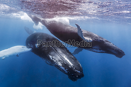 a mother and calf pair of