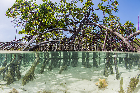 over and under water photograph of