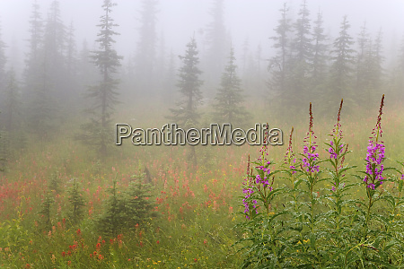 canada british columbia revelstoke national park