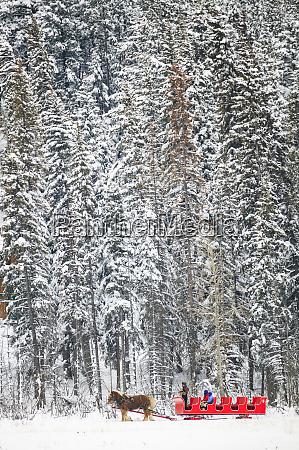 sleigh ride near town of banff