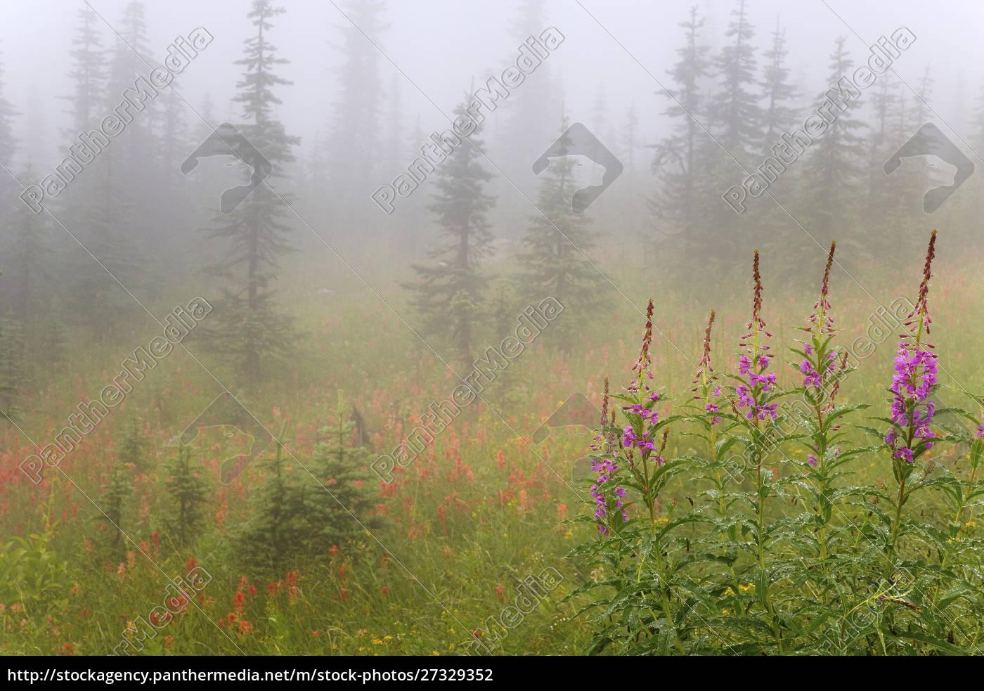 canada, , british, columbia, , revelstoke, national, park. - 27329352