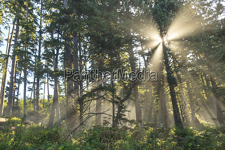 sunshine streaming through trees juan de