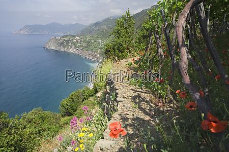 italy cinque terre hillside pathway above