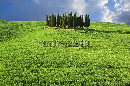 europe italy tuscany group of cypress