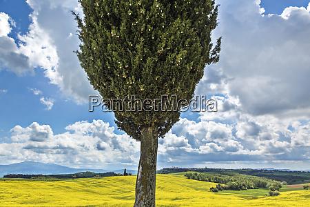 europe italy san quirico dorcia cypress
