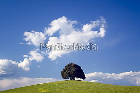 europe italy san quirico dorcia tree