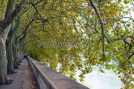 lungotevere dei fiorentini tiber waterfront of