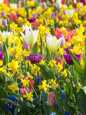 multicolored flowers in spring bloom