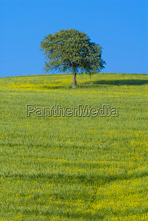 tree in a field val dorcia