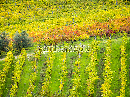 chianti region autumn colors
