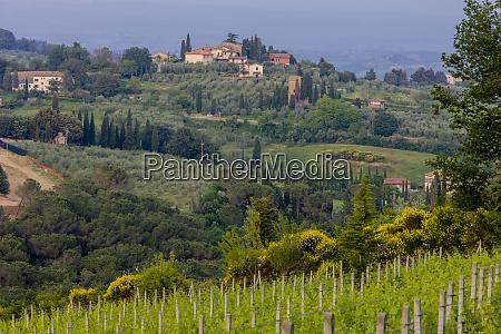 farmhouse with vineyard tuscany italy