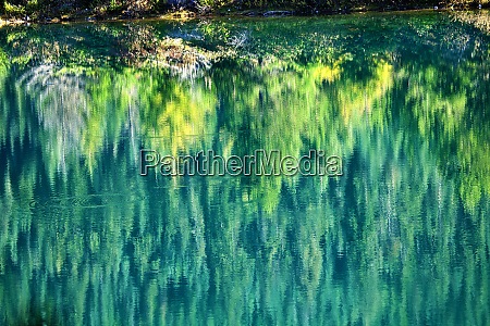 green yellow trees fall reflection abstract