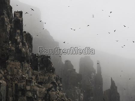 arctic ocean norway svalbard mountain bird