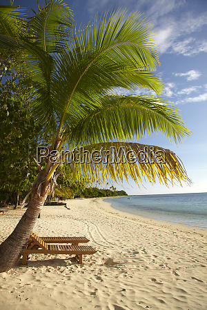 beach and palm trees plantation island