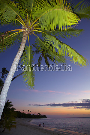 palm trees and sunset plantation island