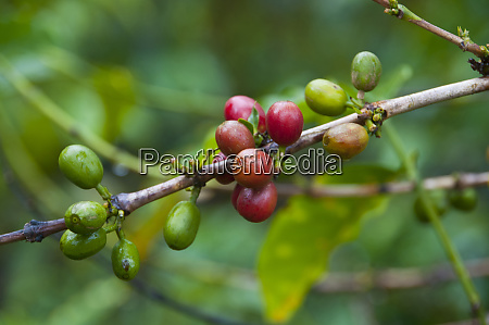 close up of coffee beans in
